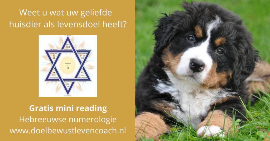 huisdier reading conscious living doelbewust leven